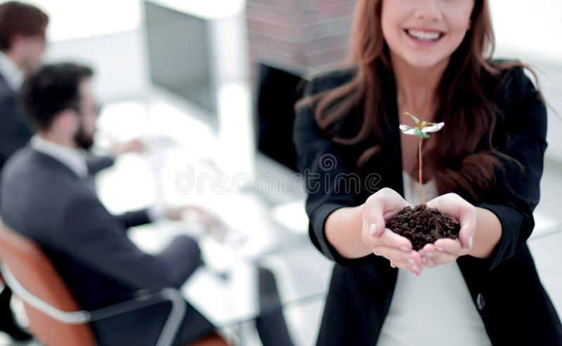 Female environmentalist showing fresh sprout. Close up. female environmentalist showing fresh sprout .photo with copy space stock image