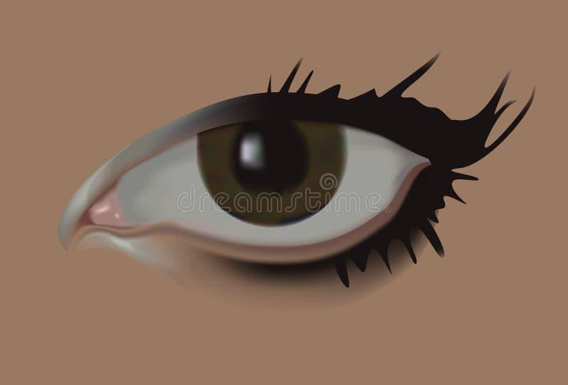 Female eye vector illustration