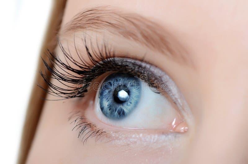 Female eye with long eyelashes close-up royalty free stock image