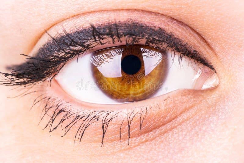 Female Eye. With makeup closeup royalty free stock photos