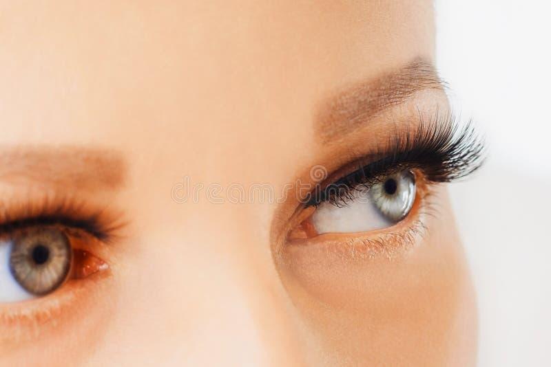 Female eyes with extreme long false eyelashes. Eyelash extensions, make-up, cosmetics, beauty royalty free stock image