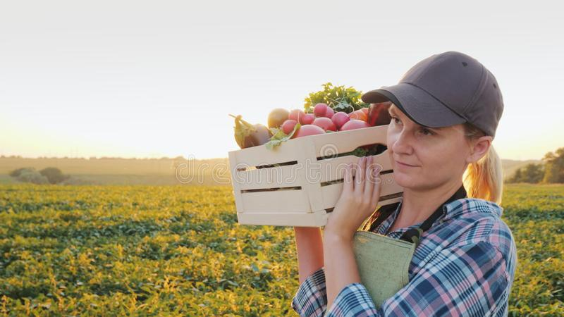 A female farmer with a box of fresh vegetables walks along her field. Healthy Eating and Fresh Vegetables stock photo