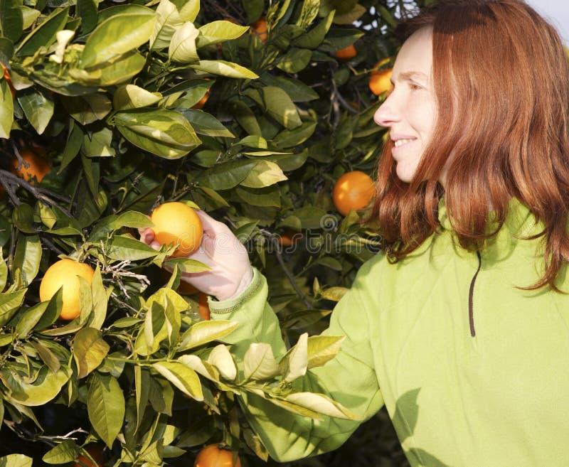 Female Farmer Harvest Picking Fruits Stock Photos
