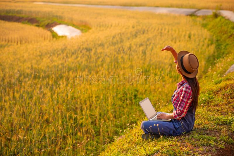 Female farmer using laptop computer in gold wheat crop field. Concept of modern smart farming by using electronics, technology and mobile apps in agricultural stock photo