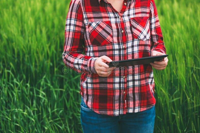 Female farmer using tablet computer in barley crop field stock photos