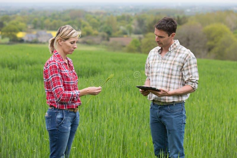 Female farmer working in farm royalty free stock photography