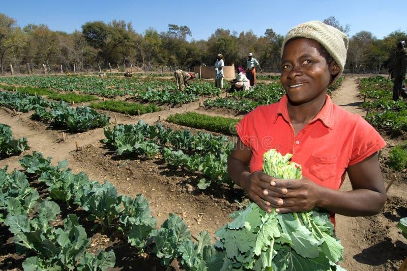 Female Farmer in Zimbabwe stock image