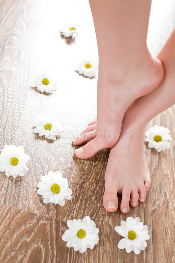 Female feet on the dark floorboard. With white daisies around stock image