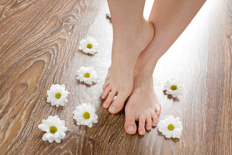 Female feet on the dark floorboard. Beautiful female feet on the dark floorboard with white daisies around stock photos