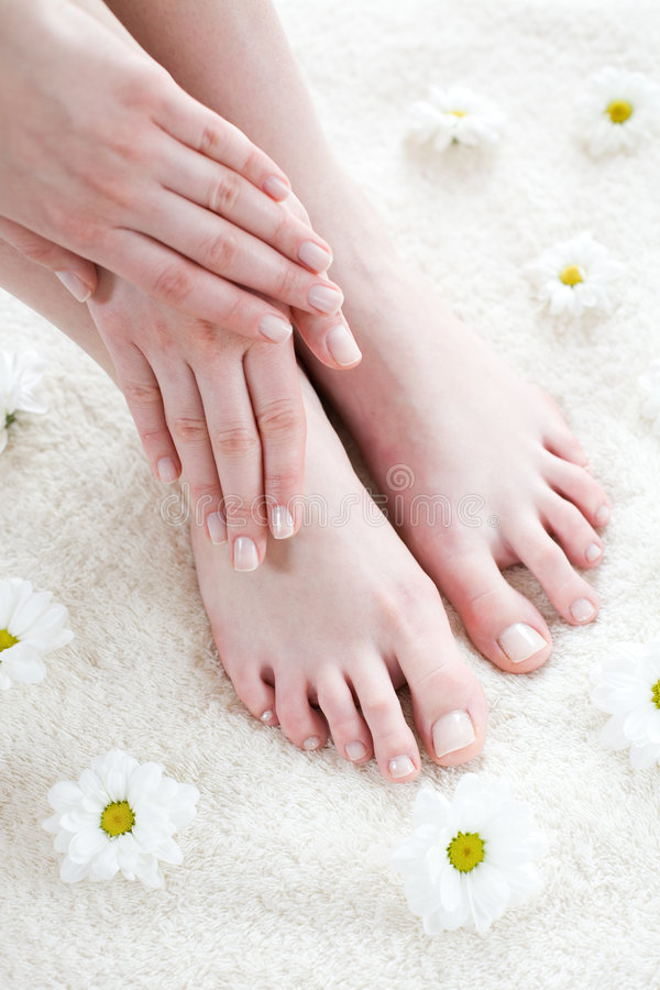 Female feet with white daisies. Beautiful female feet and hands / Spa treatment stock photo