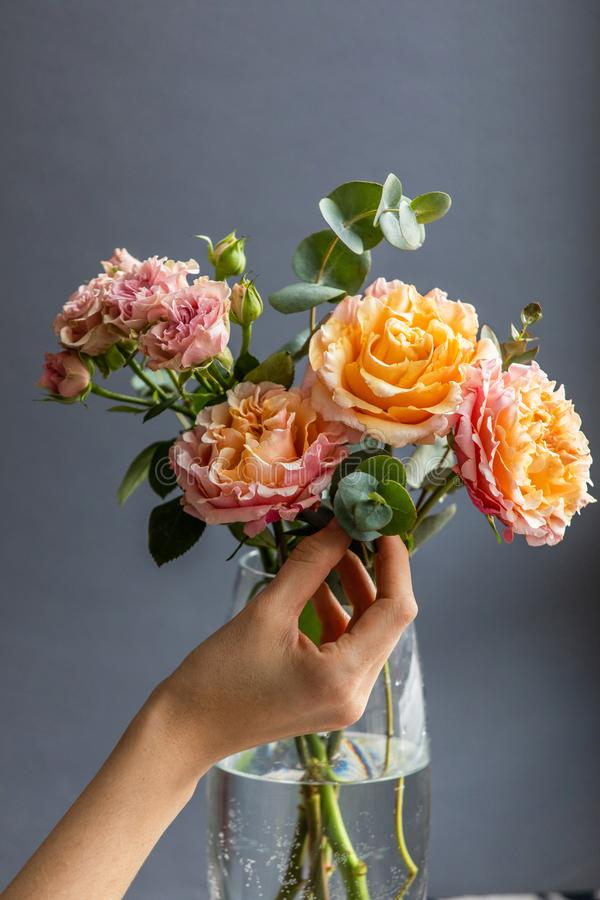 Female florist making flower arrangement of peony and shrub roses and eucalyptus branches in a vase royalty free stock image