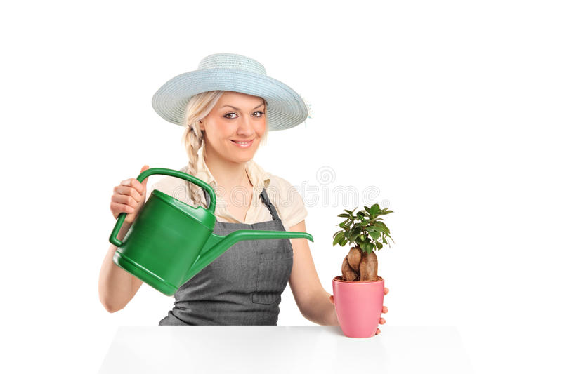 Download Female Florist Watering A Bonsai Tree Stock Image - Image: 22279025