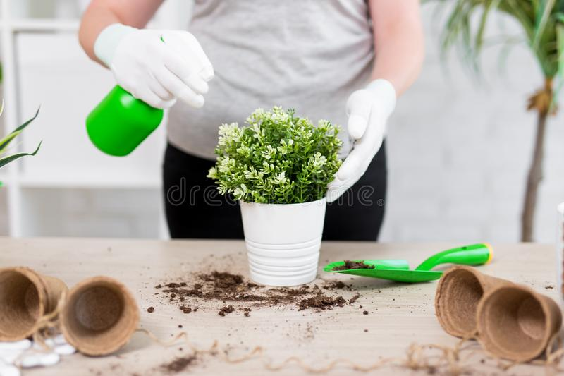 Female gardener hands planting and watering flowers with spray bottle. Close up of female gardener hands planting and watering flowers with spray bottle royalty free stock photos