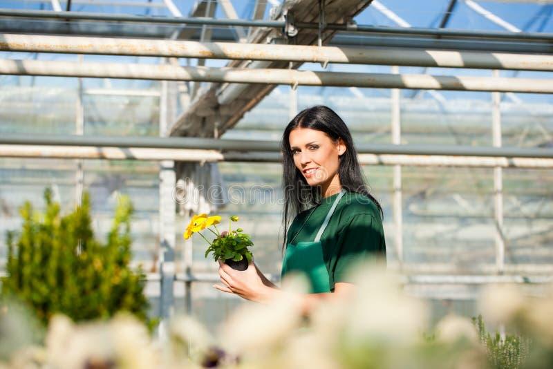 Download Female Gardener In Market Garden Or Nursery Stock Image - Image: 25680027