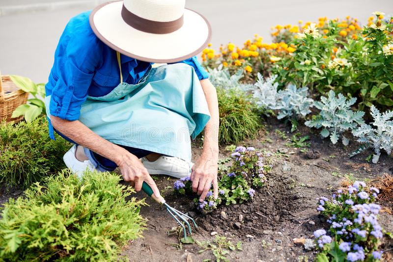 Female Gardener Planting Flowers royalty free stock images