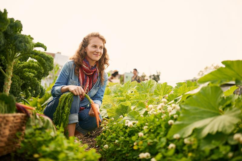 Friendly woman harvesting fresh vegetables from the rooftop gree stock photos
