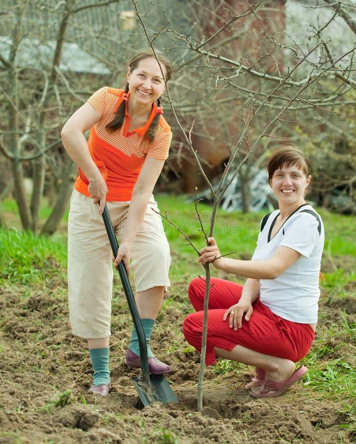 Female gardeners planting tree stock photo