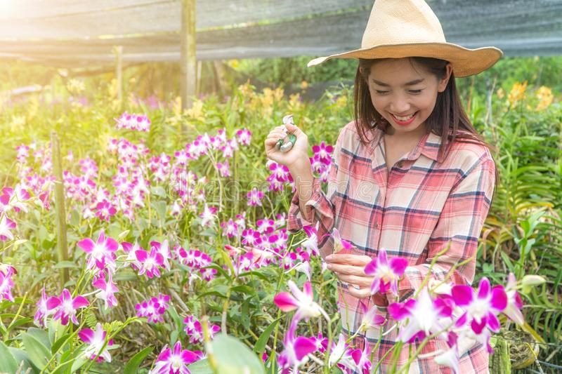 Female gardeners wear a plaid shirt and wear a hat. Hands holding scissors for cutting orchids stock image