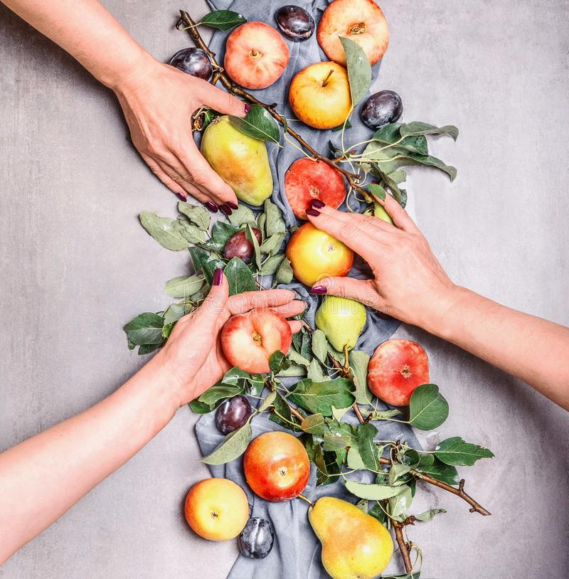 Female girls hands holding seasonal organic fruits from garden: apples, pears, peaches, plums with leaves , top view. Flat lay. royalty free stock images