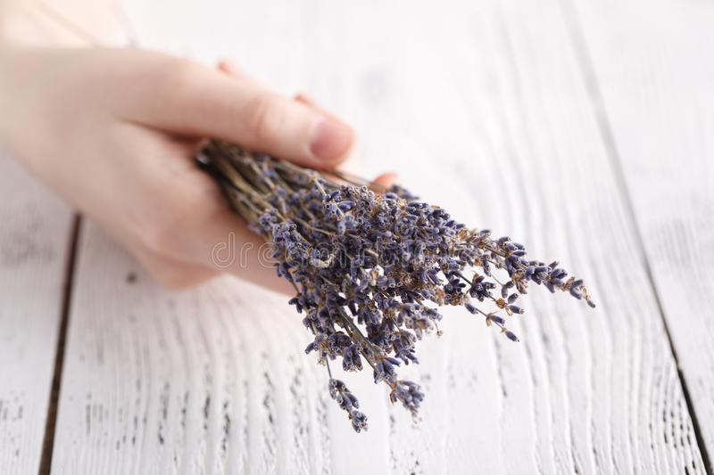 Female give bouquet of lavender in hands stock photo