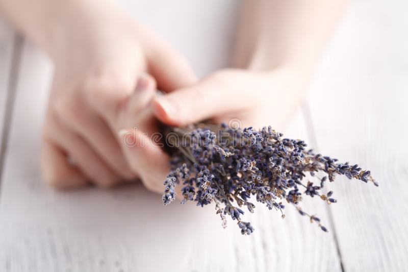 Female give bouquet of lavender in hands royalty free stock photo