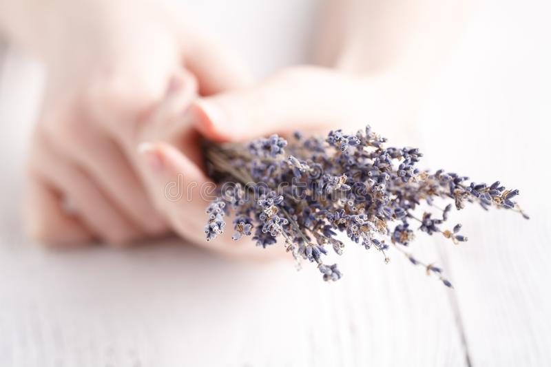 Female give bouquet of lavender in hands stock images