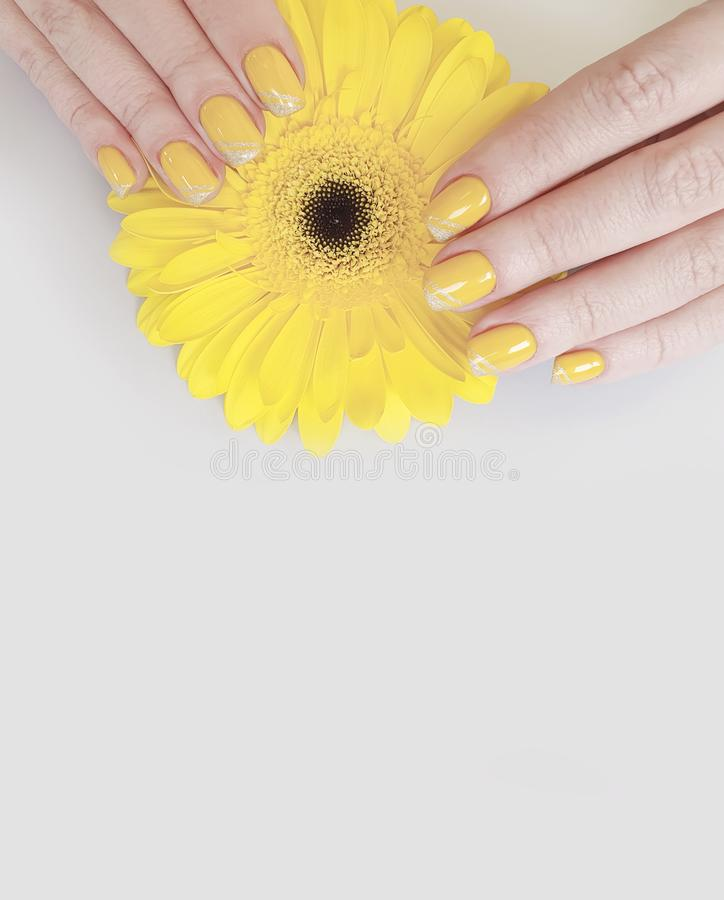 Female hand beautiful manicure gerbera flower stock photography