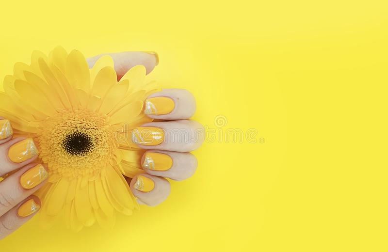 Female hand beautiful manicure gerbera delicacy flower summer royalty free stock photos