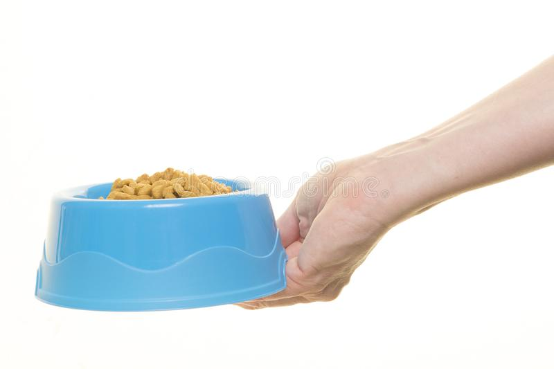 Female hand holding blue plastic feeding bowl filled with cat kibble isolated on a white background royalty free stock photos