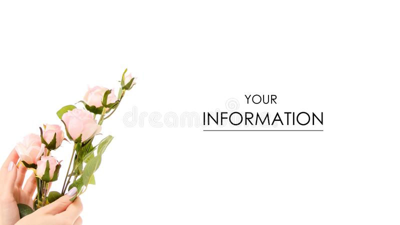 Female hand holding a branch of pink roses pattern royalty free stock photography
