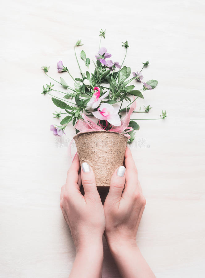 Female hand holding flowers pot with floral arrangements on white wooden background. Gardening and flowers still life royalty free stock images