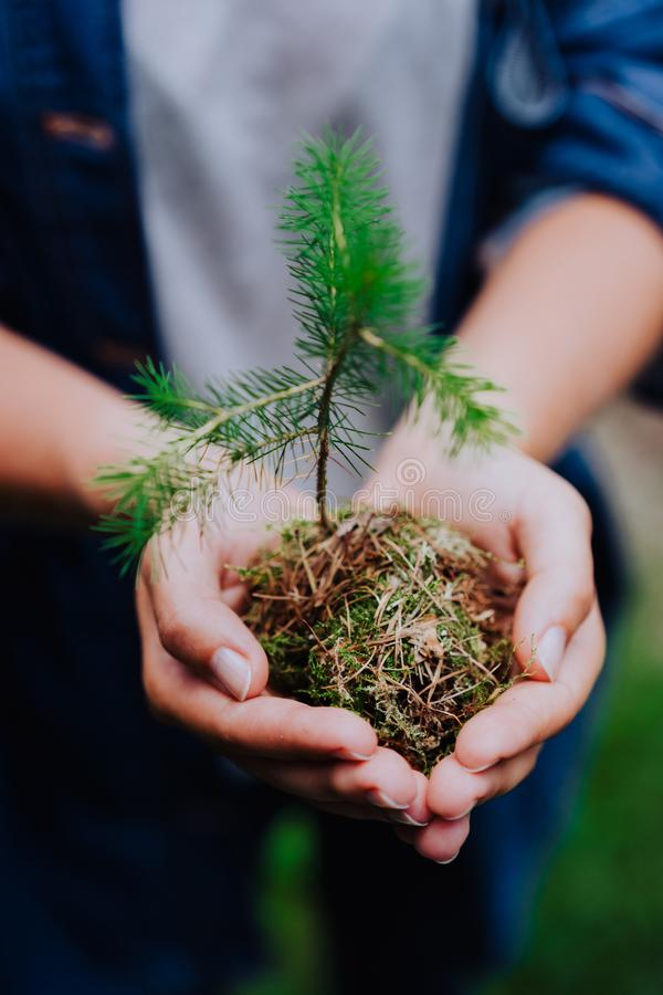 Female hand holding sprout wilde pine tree in front in nature green forest. Earth Day save environment concept. Growing stock photo