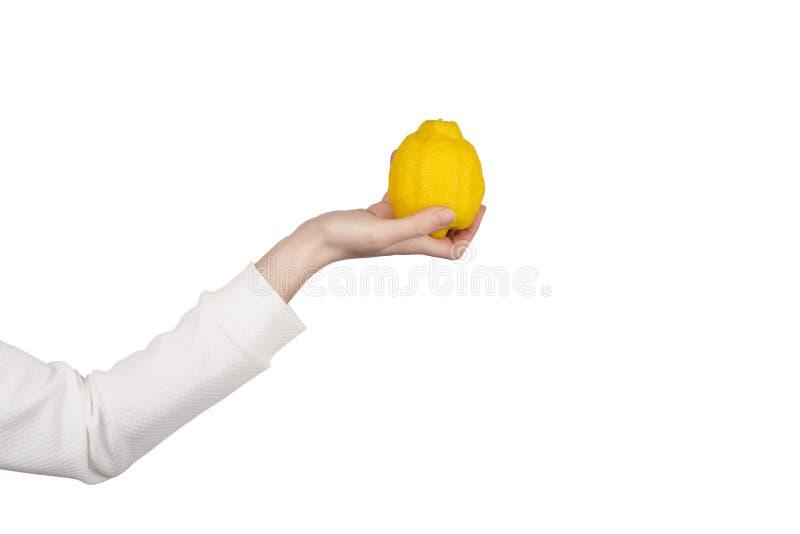 Female hand holds big bright lemon fruit isolated on white background royalty free stock images