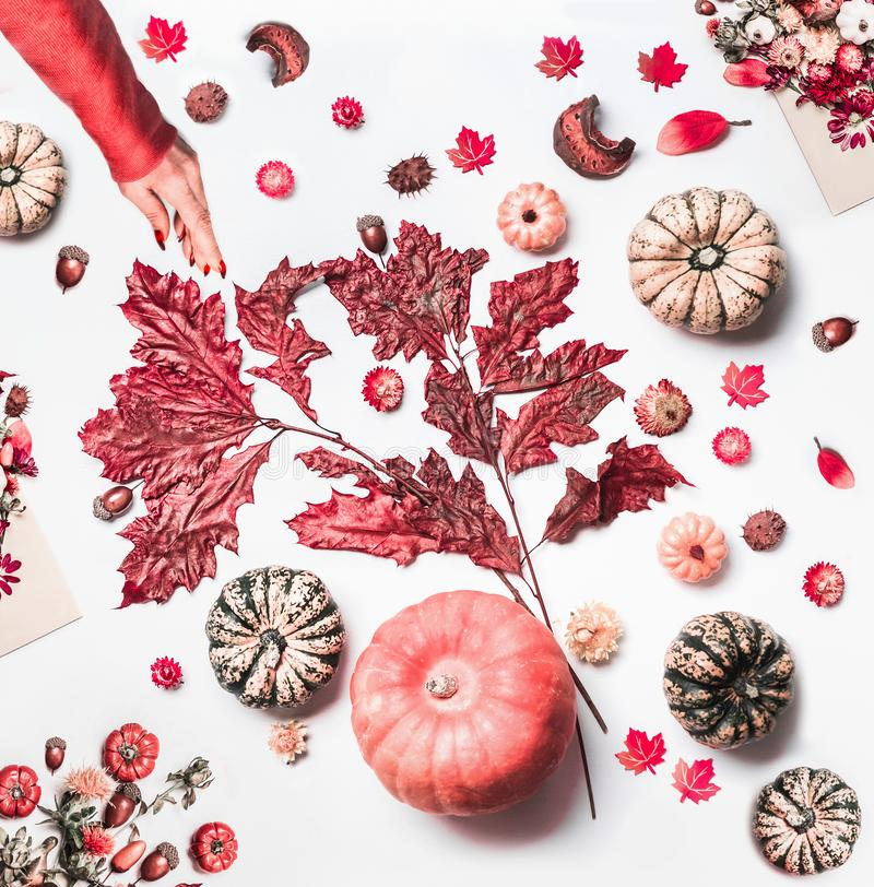 Female hand make autumn arrangement with pumpkins,fall leaves, dried flowers on white work space background. Top view. Pattern. royalty free stock image