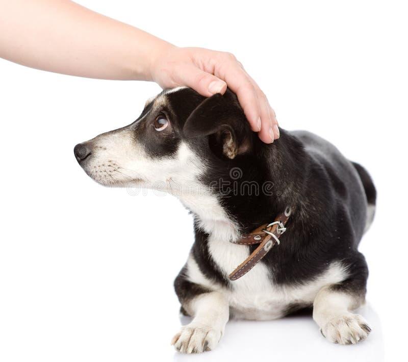 Female hand patting dog head. on white background stock photos