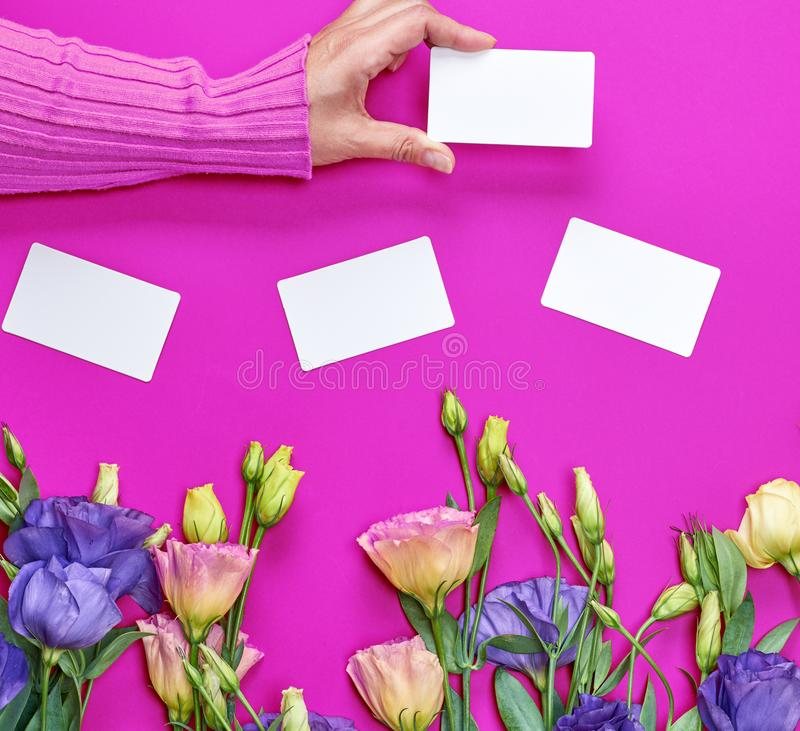 Female hand in pink sweater holding a blank white paper business card royalty free stock photos
