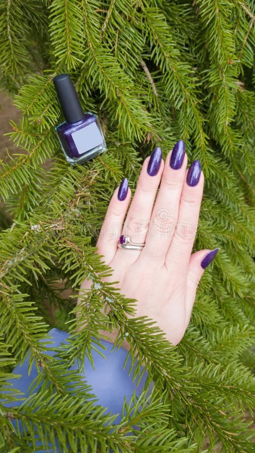 Female hand with purple long nails and nail polish bottle. Female hand with purple long nails manicure and nail polish bottle royalty free stock photos
