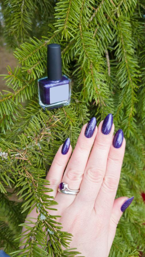 Female hand with purple violet long nails. And nail polish bottle royalty free stock image
