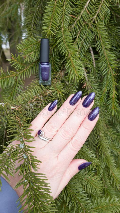Female hand with purple violet long nails. And nail polish bottle stock photography