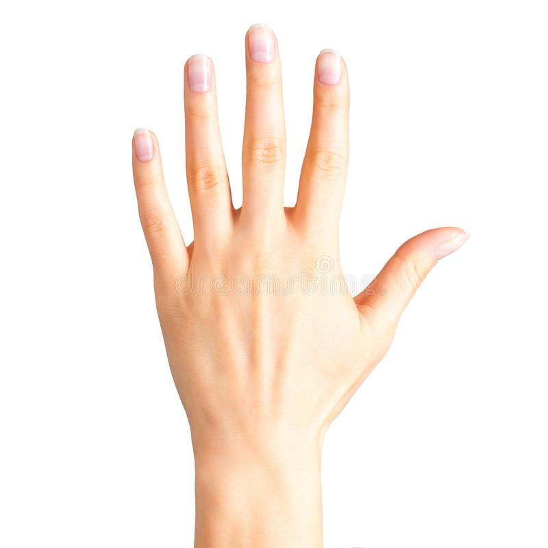 Female hand showing five fingers and palm royalty free stock photo