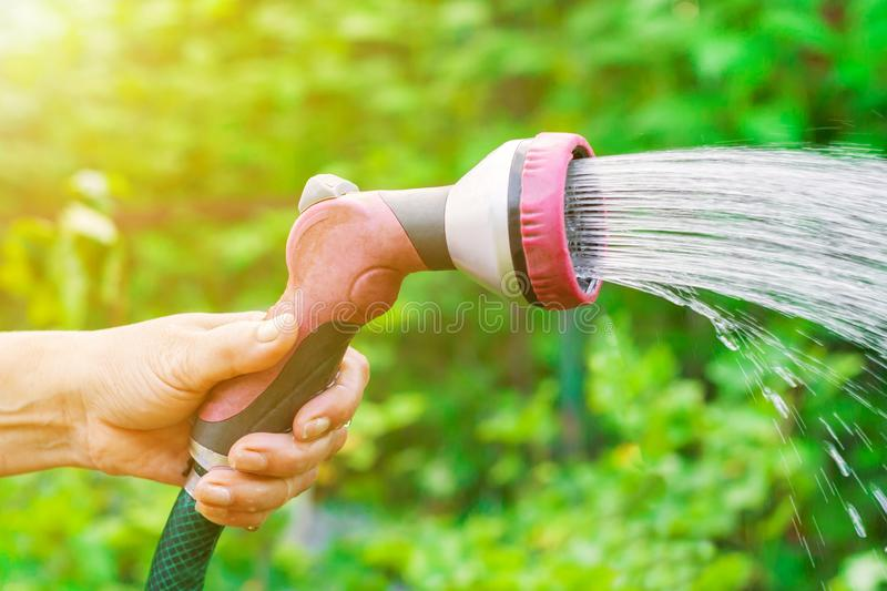 Female hand with sprinkler watering a garden royalty free stock photos