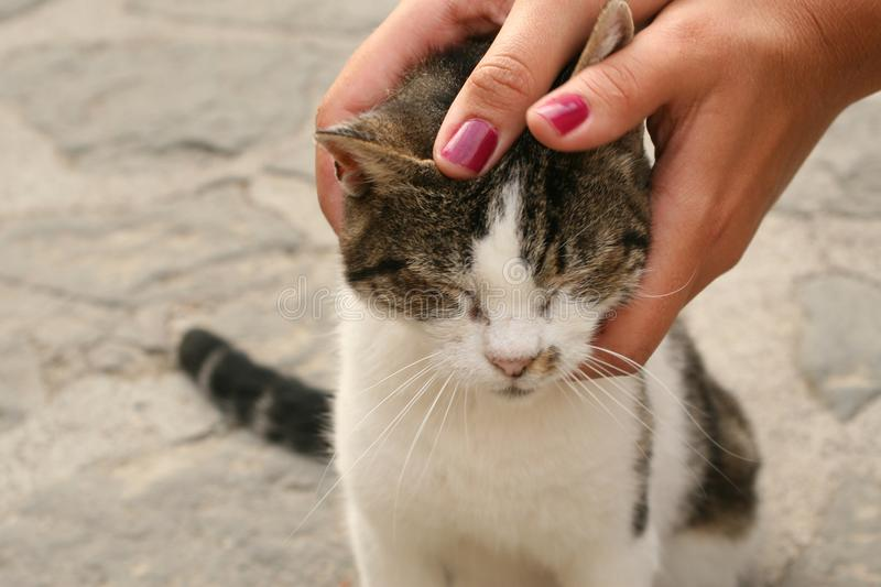 Hand stroking a cat royalty free stock photo