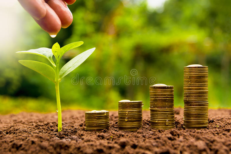 Female hand watering young plant with stack coin for growing bus royalty free stock photos