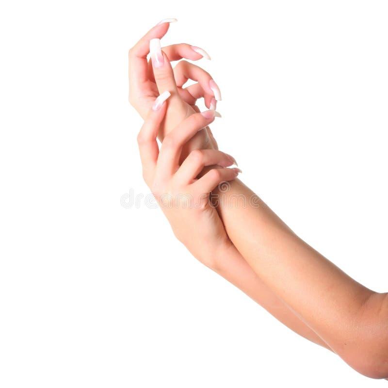Download Female hands stock photo. Image of make, fingernail, care - 8849714