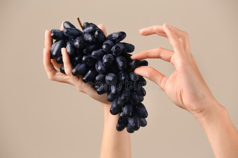 Female hands with cluster of fresh ripe juicy grapes on light background royalty free stock image