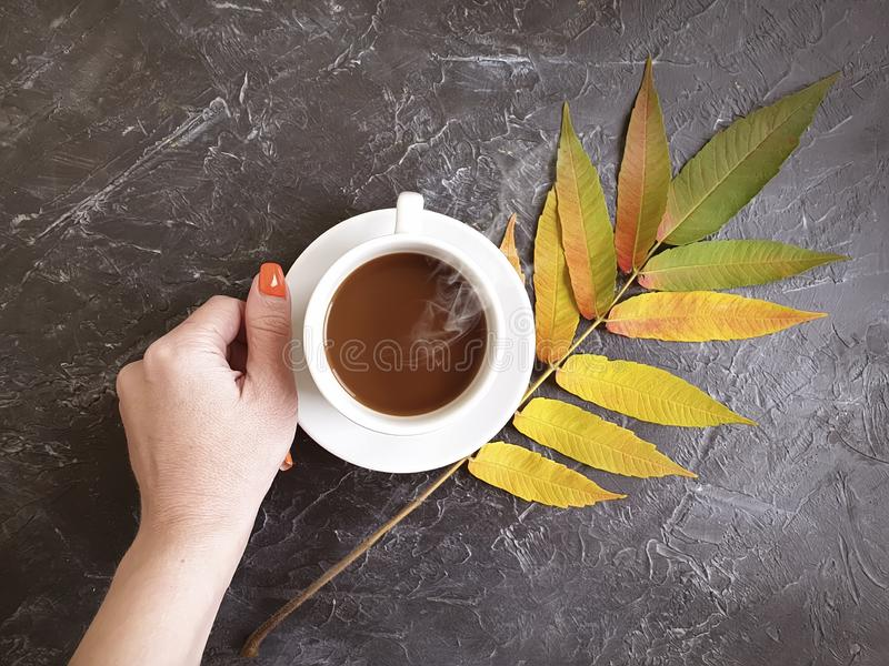 Female hands cup of coffee autumn leaves on concrete background royalty free stock images