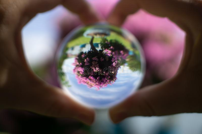 Female hands in the form of heart holding large crystal ball. Female hands in the form of heart holding large crystal ball bougainvillea flower reflection in it royalty free stock photos