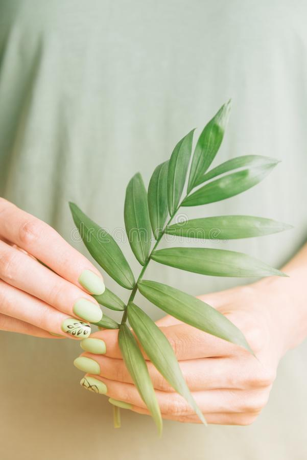Female hands with green manicure holding palm leaf. stock photography