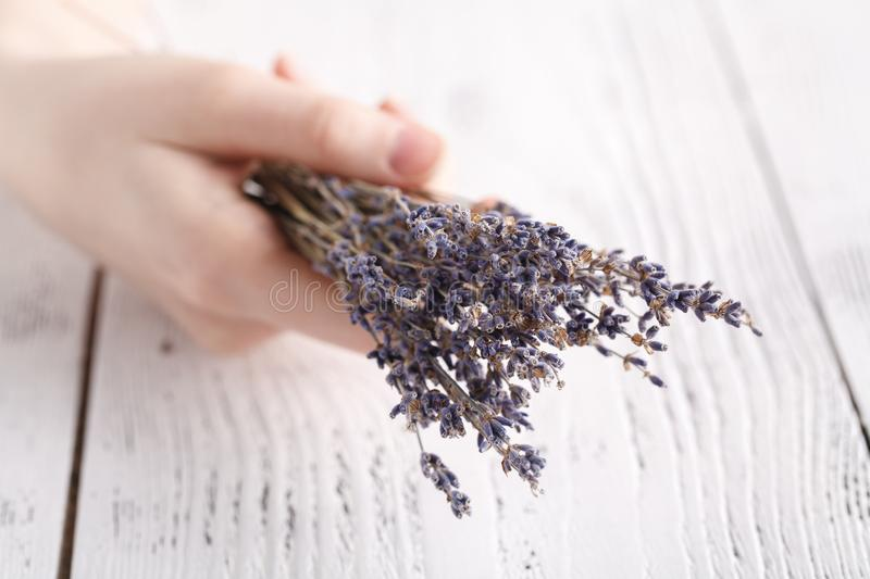 Female hands hold bunch of dry lavender stock photography
