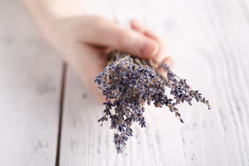 Female hands hold bunch of dry lavender stock photos
